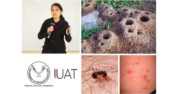 Monitorean hormiga roja de fuego en Tamaulipas