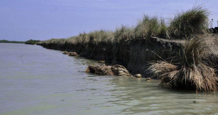 Sistemas de manglar actúan como barrera natural contra huracanes